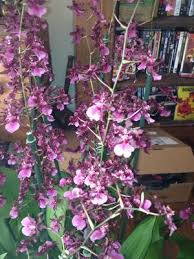 Orchids Care Orchid Care Tips Blog