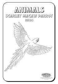 parrots coloring pages free printable parrot coloring pages for kids macaw coloring page