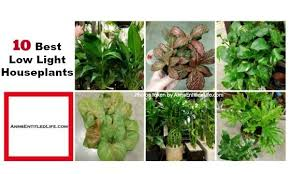 best low light house plants 10 best low light houseplants