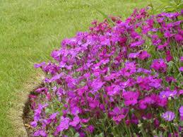 top 10 flowers for garden color dengarden
