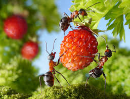 how to get rid of ants weedicide co uk