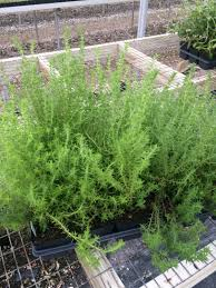 buy native plants online home green seasons nursery