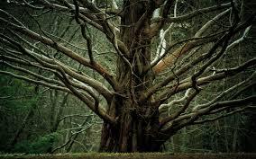 million branch tree skins million branch tree
