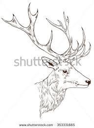 sketch deer head vector eps10 stock vector 159865733 shutterstock