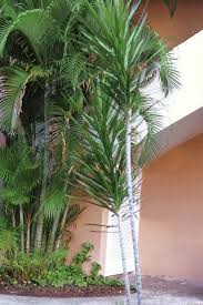 Indoor Trees For The Home by Cleaning Indoor Air With Plants Hgtv