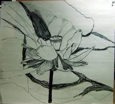 watercolors and words american lotus flower sketch