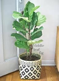 design indoor plant pots uk plants at home wishlist large indoor