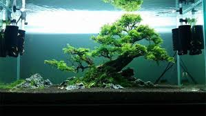 Aquascaping With Driftwood Masterpiece Bonsai Driftwood W12 Designs Aquarium Products