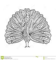 peacock bird coloring book for adults vector stock vector image