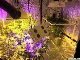 mrrobert420 u0027s 10x10 grow tent multiple strains perpetual page 53