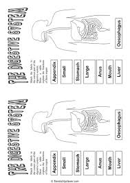 digestive system cut and paste by fiendishlyclever teaching