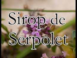 thym serpolet cuisine sirop de serpolet cuisine sauvage 5