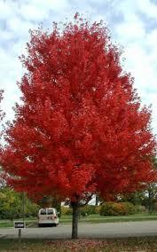 plant material trees baseline nurseries ontario