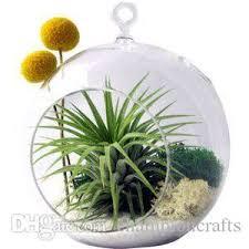 2018 6 inch hanging planter glass terrarium indoor plant succulent