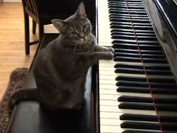 Cat Playing Piano Meme - meme template search imgflip