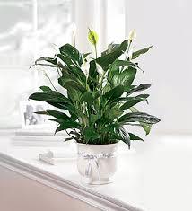 dallas florist dallas house of flowers the ftd comfort planter dallas tx 75237