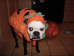 these pets just aren u0027t digging their halloween costumes 28 photos