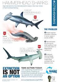 how many sharks are endangered u2013 the super fins