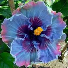 amazon black friday golf ball retirer learn how to grow hibiscus from cutting with pictures detailed