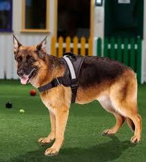 5 Best Dog Harnesses Reviews of 2018 BestAdvisor