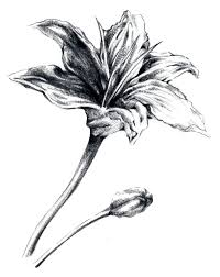 rough sketch flower by ehri on clipart library clip art library