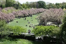 Prospect Park Botanical Garden New York Wanders Botanic Garden Wander