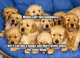 Much Dog Meme - i has a hotdog puppies funny dog pictures dog memes puppy