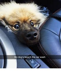 Dog In Car Meme - my dog s face in the car wash dogs meme on me me