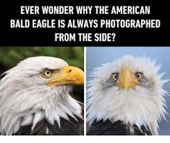 America Eagle Meme - 25 best memes about american bald eagle american bald eagle