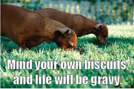 Dachshund Meme - dachshund meme ccph cus commons pet hospital