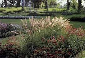 ornamental grass garden ideas howstuffworks