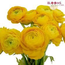 Ranunculus Wholesale Ranunculus U2013 Ranunculus For Diy Weddings