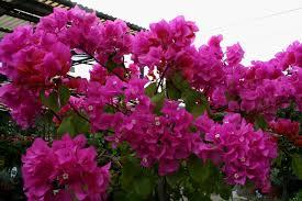 San Francisco Flower Garden by Marty Nemko Best Garden Plants For The San Francisco Bay Area