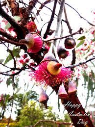 australian native medicinal plants australian native flowers gardens u0026 polka dots