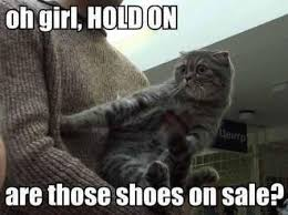 Funny Kitten Meme - look out it s caturday fashion cat and more cats vs cancer