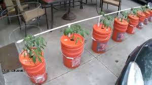 self watering easy watering self watering bucket system growing in buckets