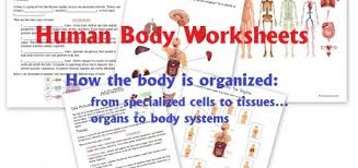 science human body unit homeschool den