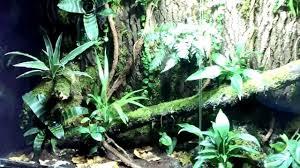 living room rainforest dart frog vivarium youtube