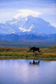 brilliant colors of denali national park alaska wallpapers 104 best alaska images on pinterest alaska travel beautiful