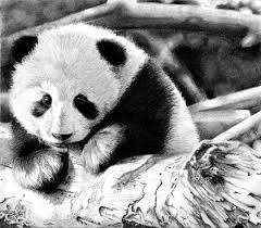 animals sketches panda bears 2828x2472 wallpaper high quality