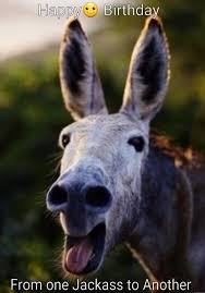 top donkey funny meme daily funny memes