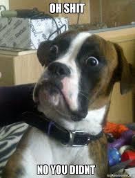 Oh Shit Meme - oh shit no you didnt skeptical dog make a meme