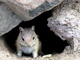 How To Hunt Squirrels In Your Backyard by Efficient Rodent Control Tips And Methods On How To Get Rid Of