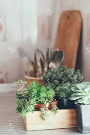 house plants green succulents in a wooden box on a metal