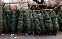 tree sale merry and happy new year 2018
