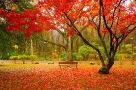 england fall foliage peak