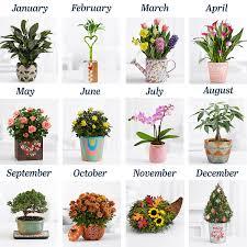 plants popular plant selections flowers