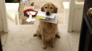 how long does air mail take to arrive reference com