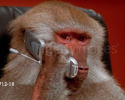 Monkey Meme - getty images baboons know your meme