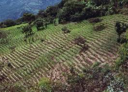 imagenes de sud yungas el diario la hoja intocable